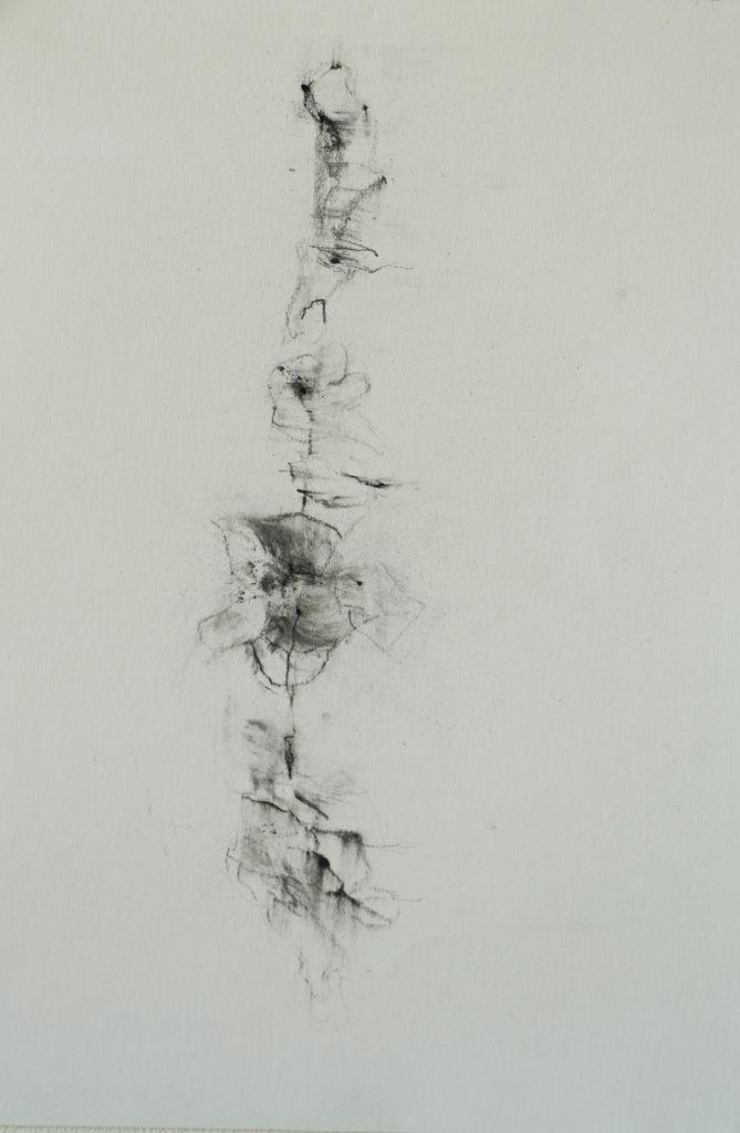 Herbier humain (série), extrait n°8, fusain sur papier, 21 x 30 cm