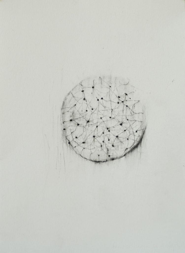 Herbier humain (série), extrait n°10, fusain sur papier, 21 x 30 cm
