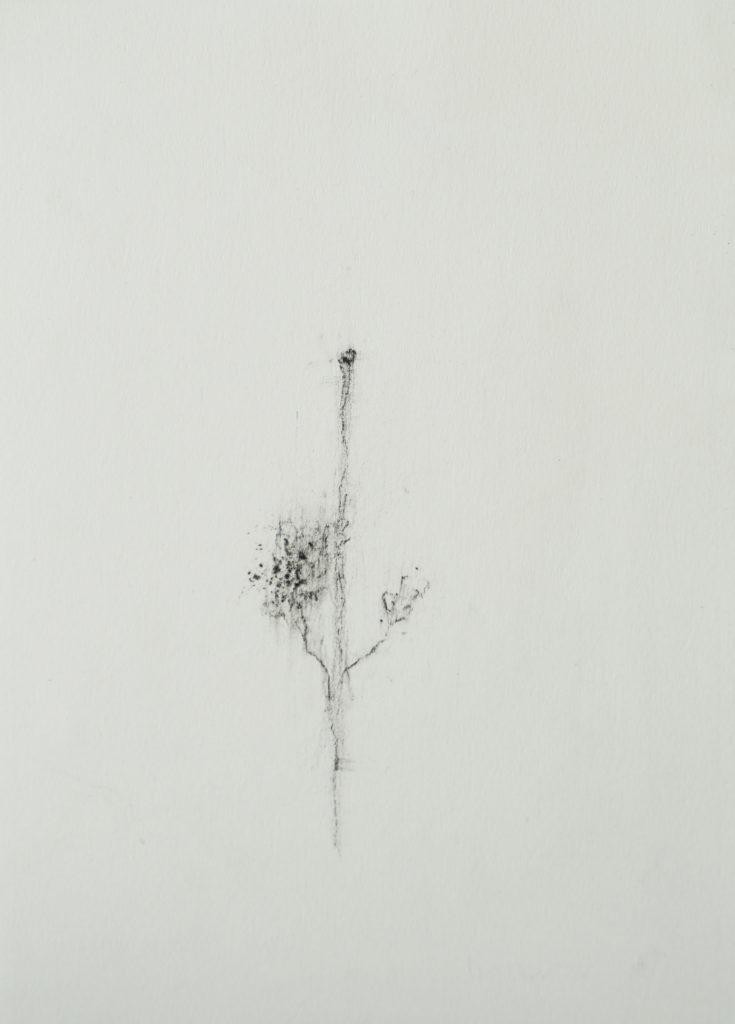 Herbier humain (série), extrait n°11, fusain sur papier, 21 x 30 cm
