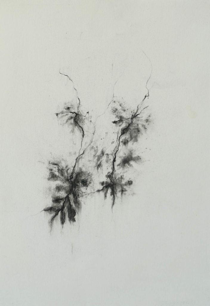 Herbier humain (série), extrait n°19, fusain sur papier, 21 x30 cm