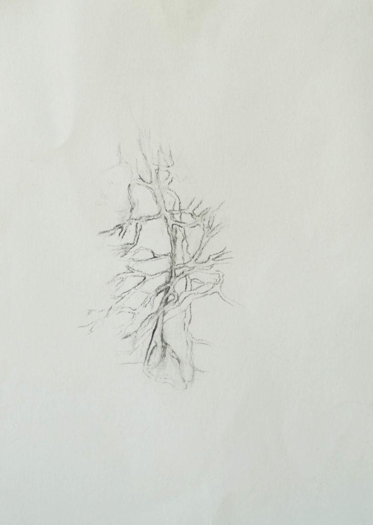 Herbier humain (série), extrait n°16, fusain sur papier, 21 x 30 cm