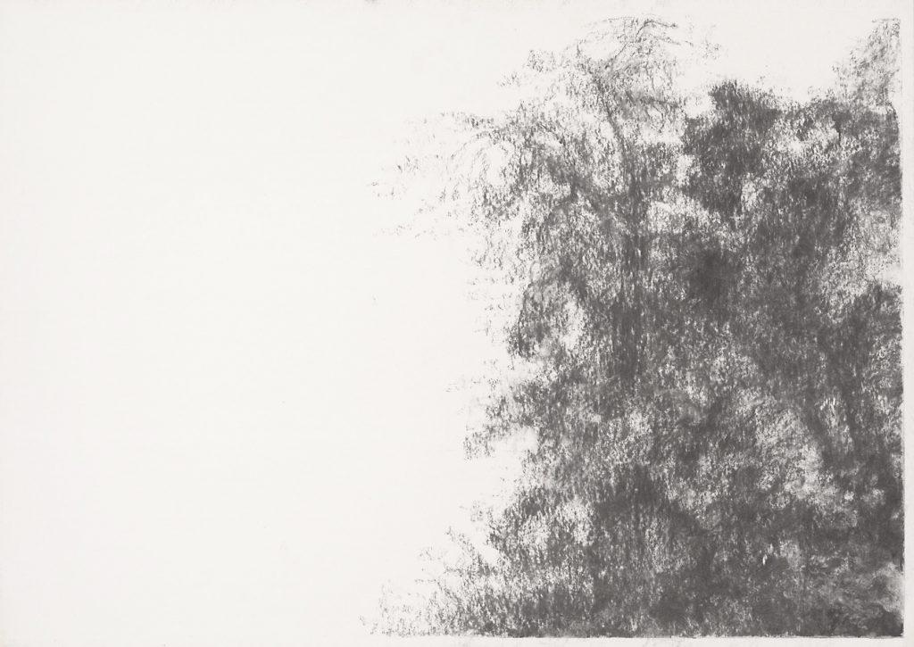 Sans titre, fusain sur papier, 41x60cm, 2013