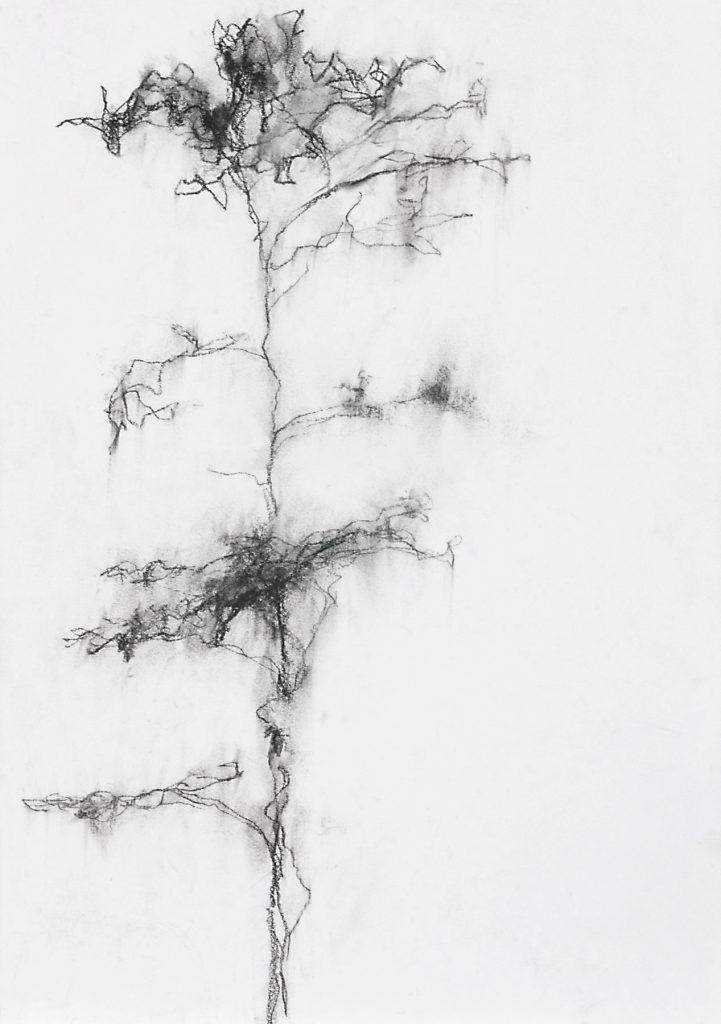 Sans titre, pierre noire sur papier, 42 x 39.5 cm, 2014