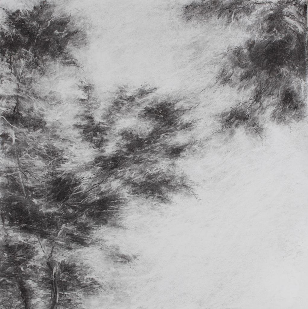 Sans titre, fusain sur papier, 50×50 cm, 2016
