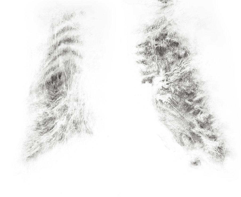Poumons, fusain sur papier, 50 x 65 cm, 2017
