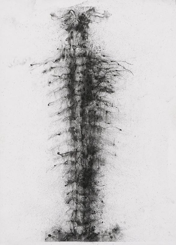 Herbier humain, (série), extrait n°5, fusain sur papier, 30 x 21 cm, 2018