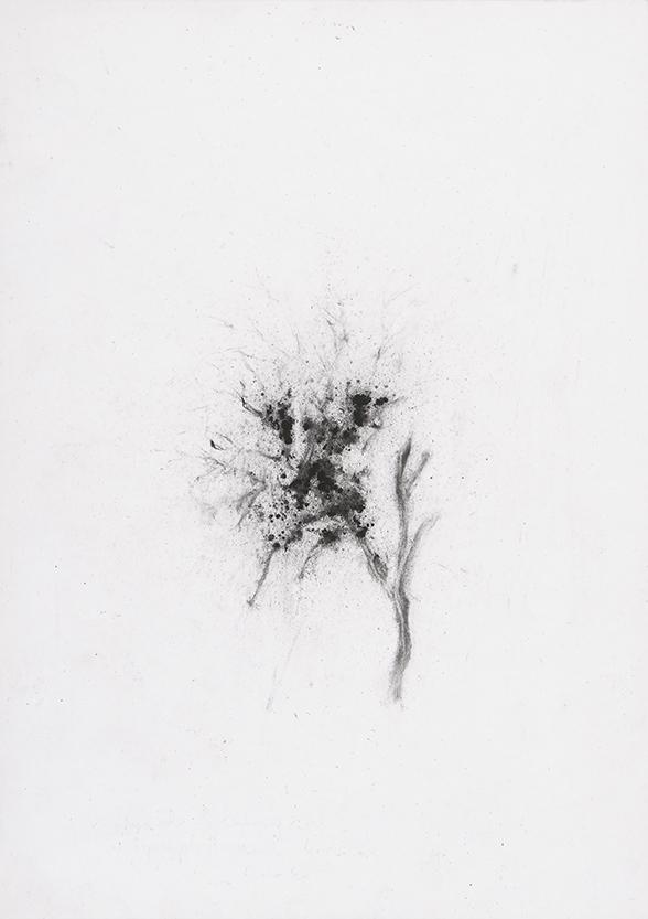 Herbier humain (série), extrait n°4, fusain sur papier, 30 x 21 cm, 2018
