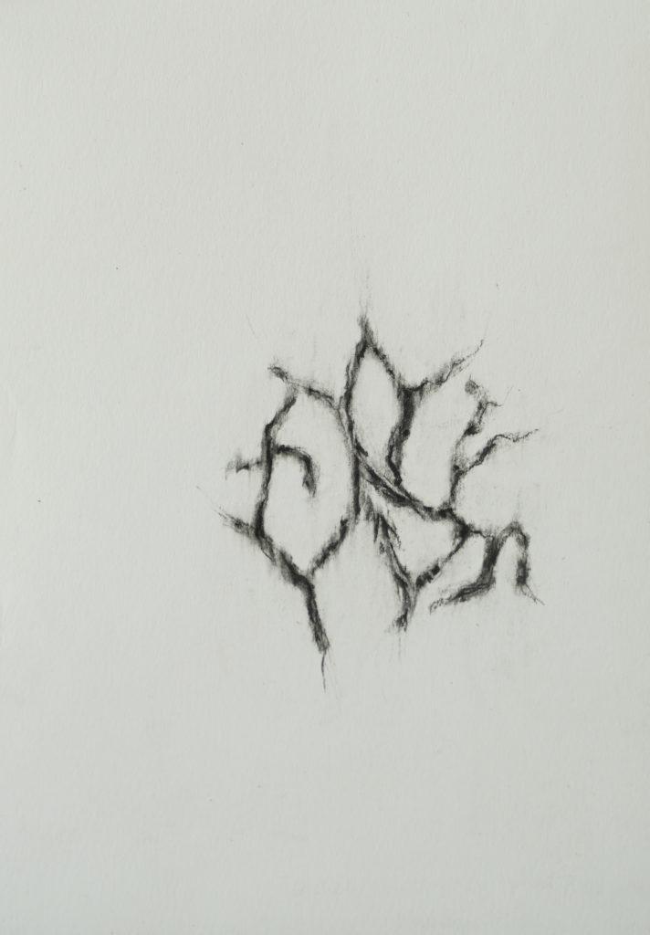 Herbier humain (série), extrait n°12, fusain sur papier, 21 x 30 cm