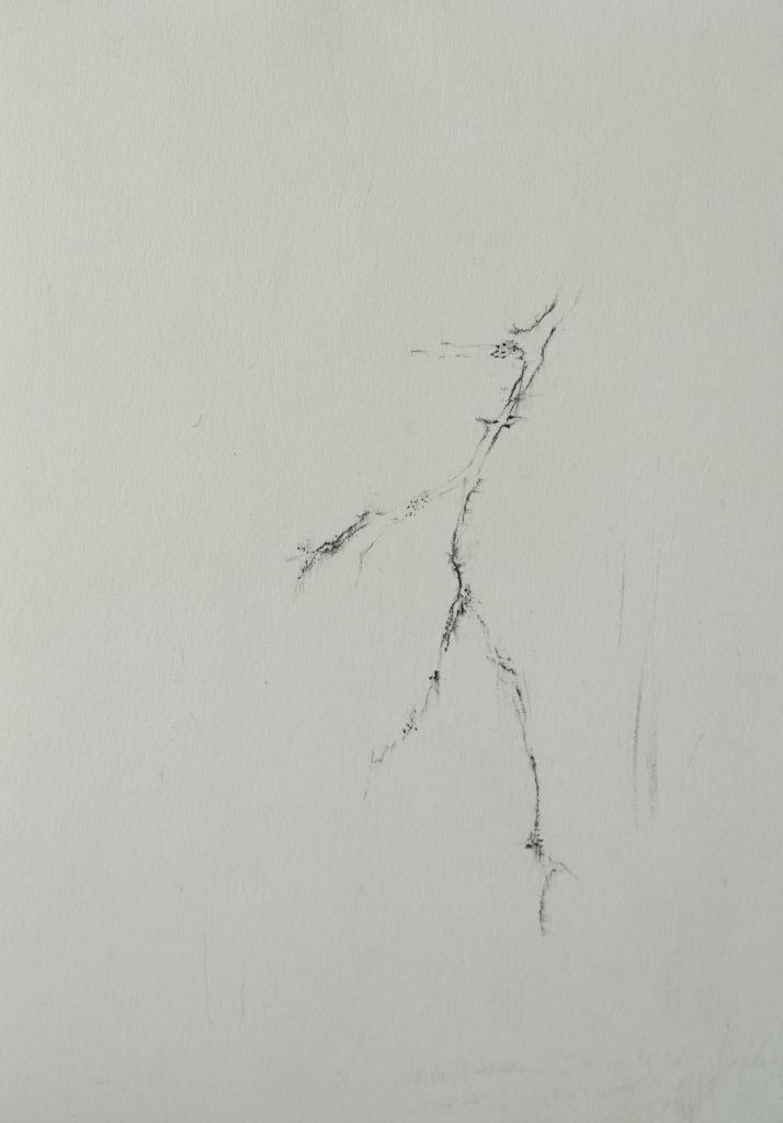 Herbier humain (série), extrait n°17, fusain sur papier, 21 x 30 cm