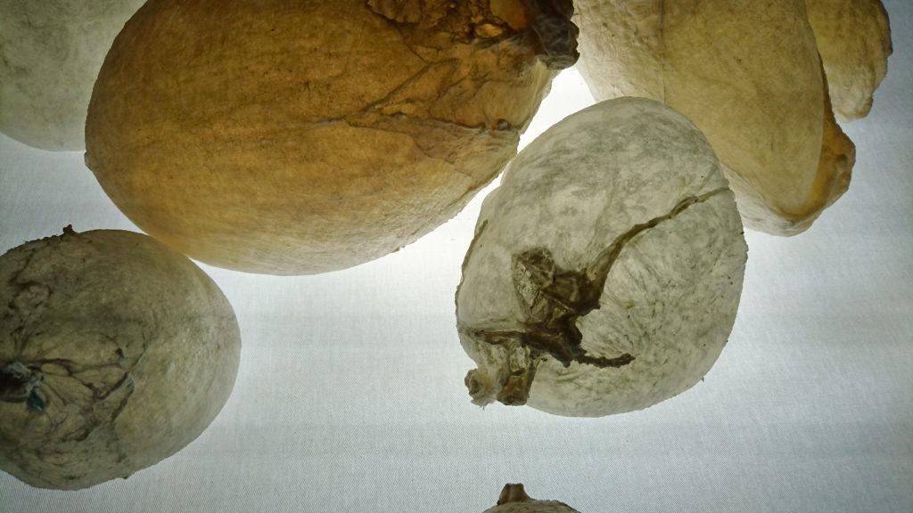 «Hallali», détail, Musée de Morat, balade des lumières 2021  © Joseph Julmy